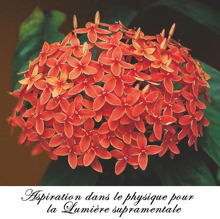 29 février_fleur aspiration Supramentale